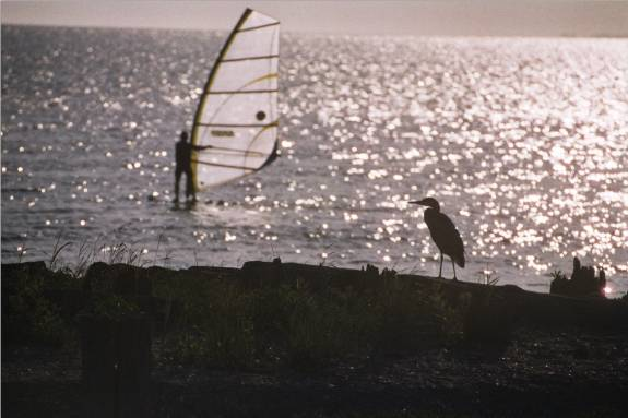 Windsurfing and a blue heron with the sun in the background taken from our beach